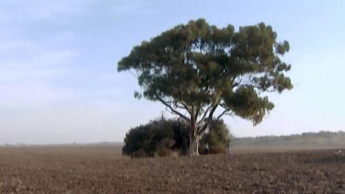 אליפים-עונה-1-פרק-51